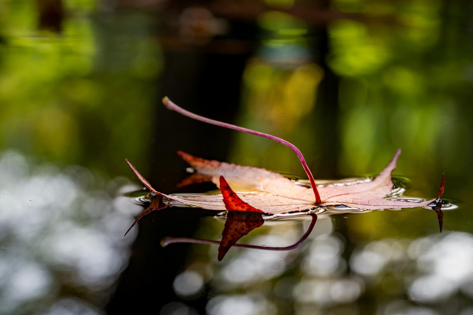Herbstblätter im Wasser