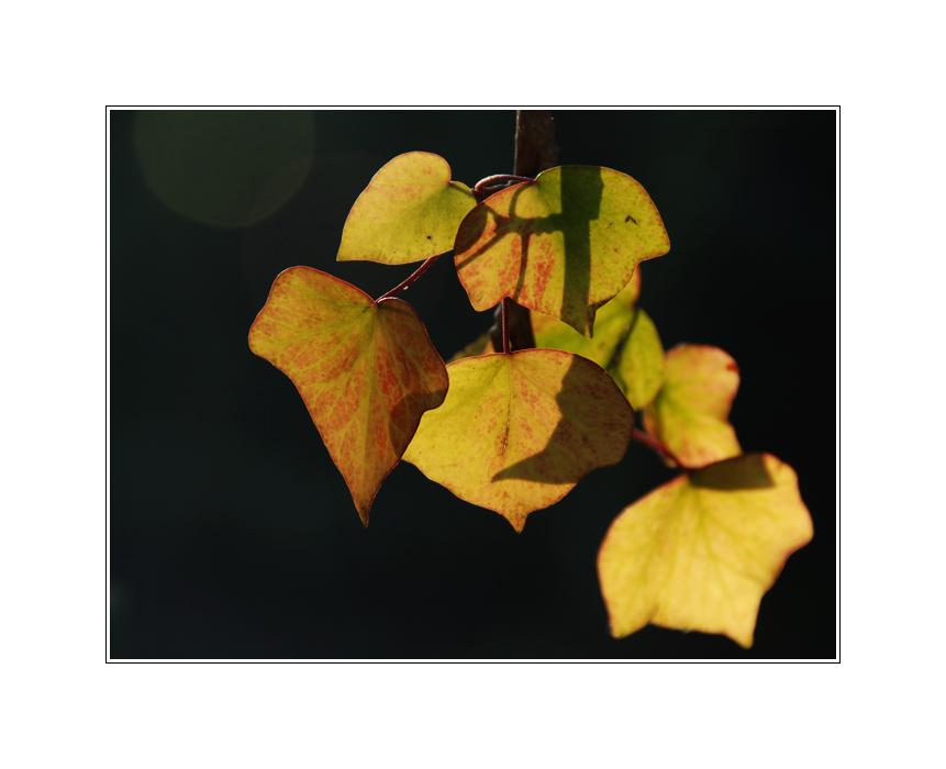 Herbstblätter im Winter...