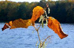 Herbstblätter in der Morgensonne