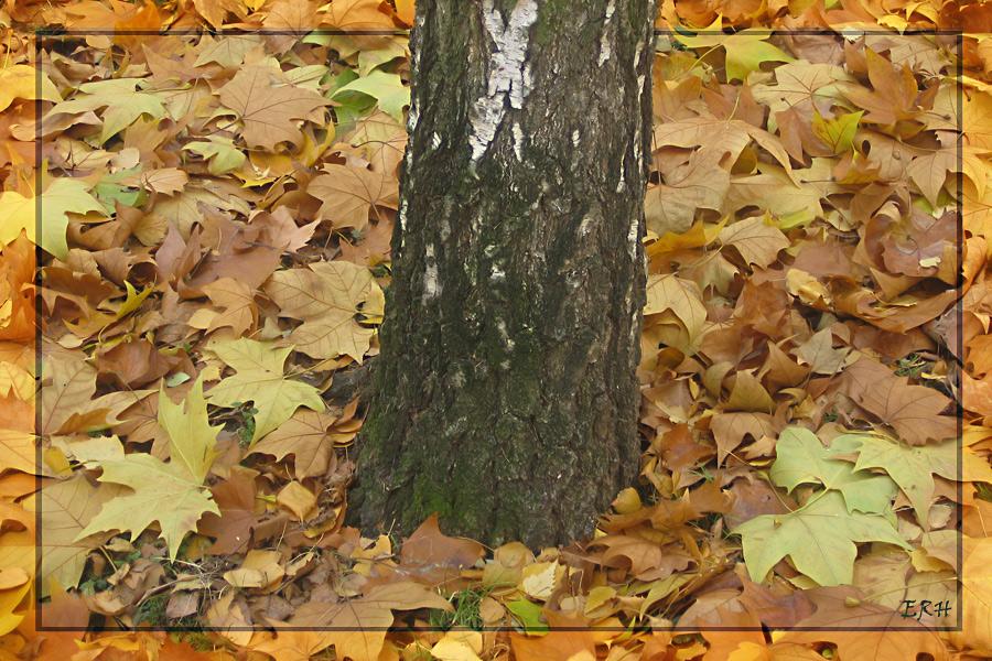 Herbstblätter mit Stamm,...