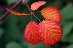 Herbst.Blätter.Stimmung.
