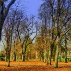 Herbstblätterteppich