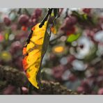 Herbstblatt 3