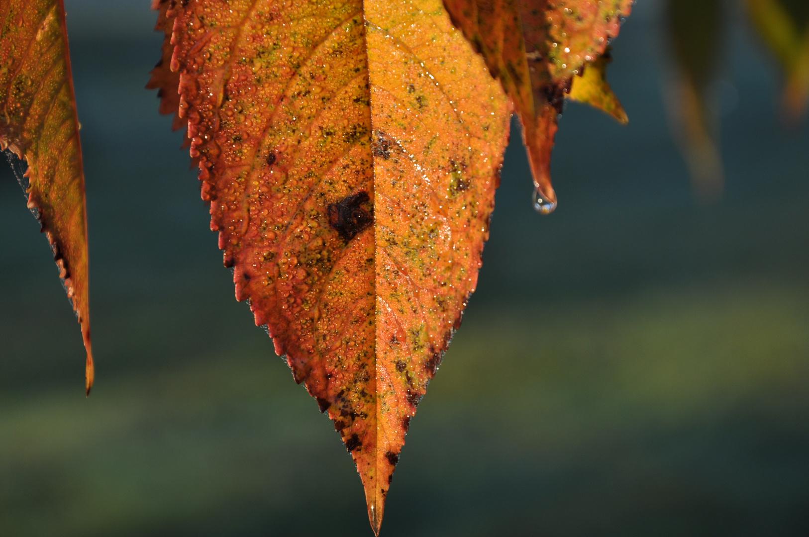.Herbstblatt.