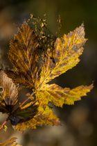 Herbstblatt