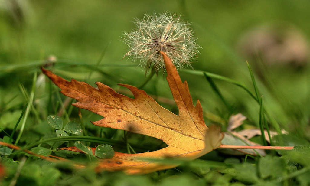 Herbstblatt*