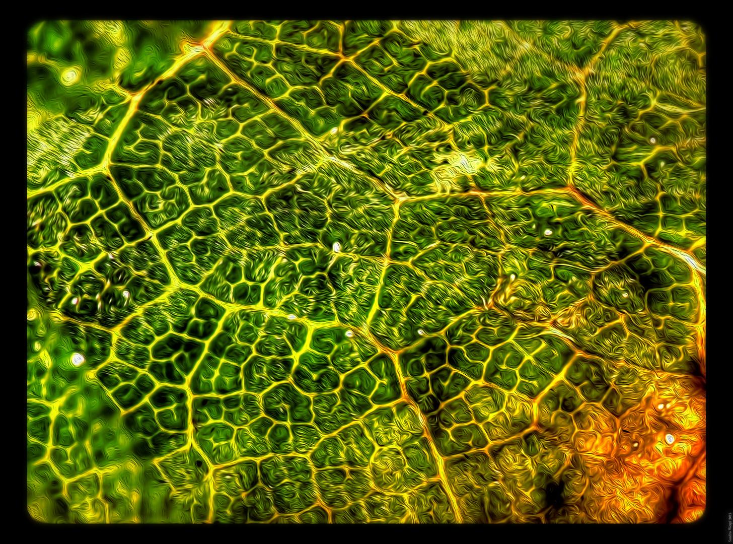 Herbstblatt am Boden 7