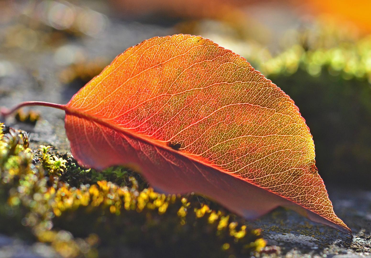 Herbstblatt fotografiert von Hilde
