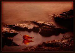 herbstblatt im meer