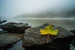 Herbstblatt im Morgennebel