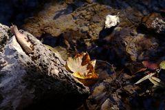Herbstblatt im Sonnenstrahl