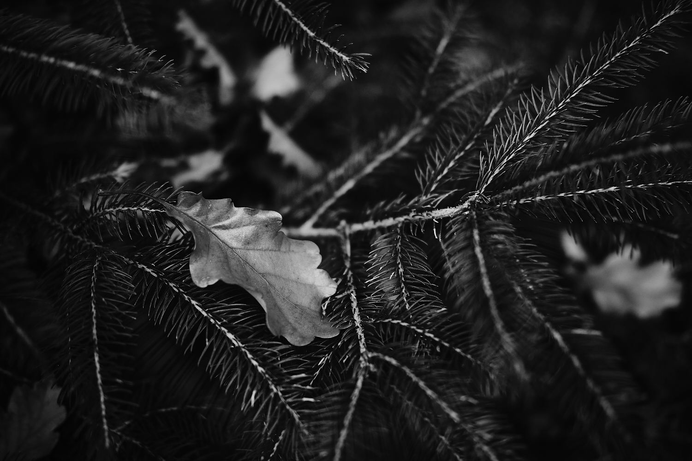 Herbstblatt in bw