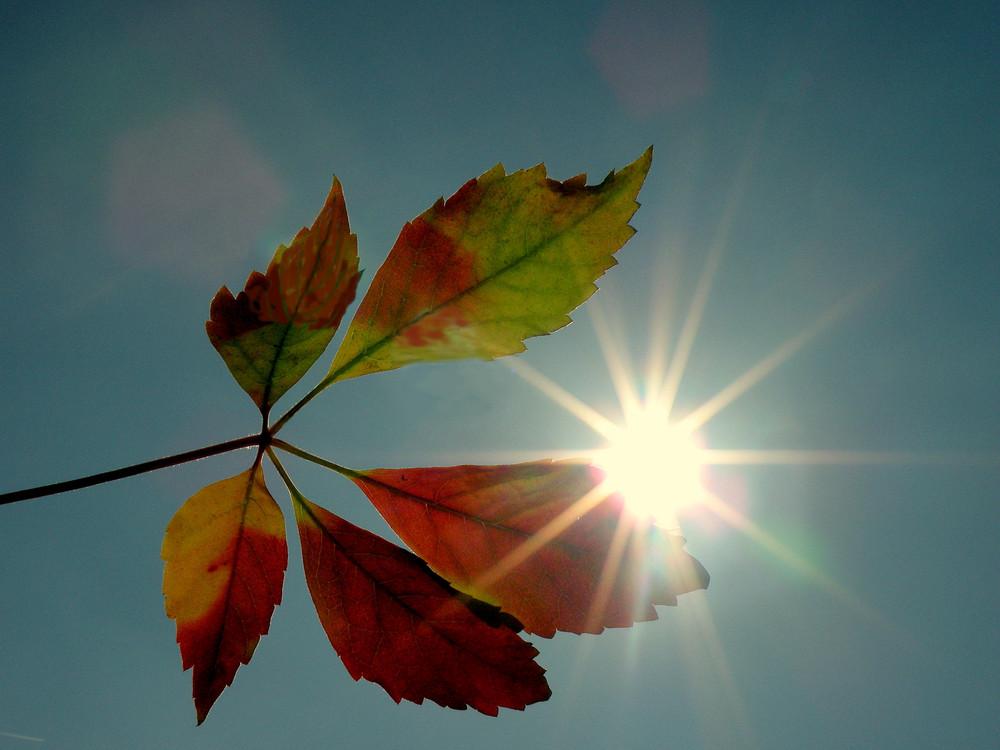 Herbstblatt mit Sternchen