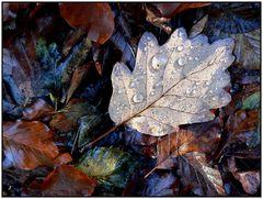 """""""Herbstblatt mit Tau"""""""