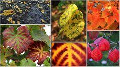 Herbstblatt - Symphonie