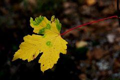 Herbstblatt - unser Foto zum Sonntag