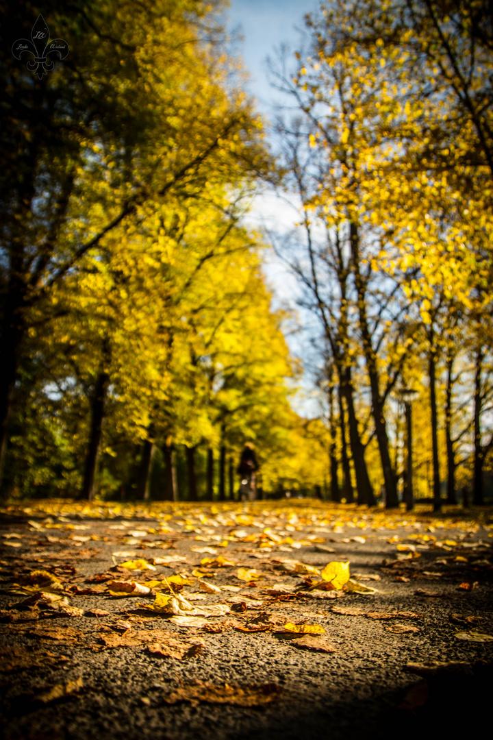 Herbstblattperspektive