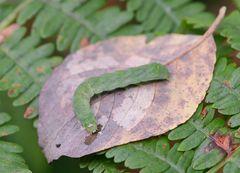 Herbstblattverwerter
