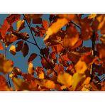Herbstblau,