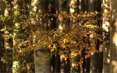 Herbstblicke