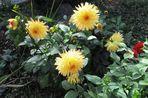 Herbstblümchen (1)