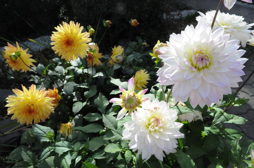 Herbstblümchen (2)