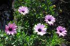 Herbstblümchen (3)