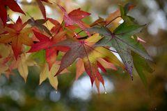 Herbstblues