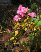 Herbstblüten