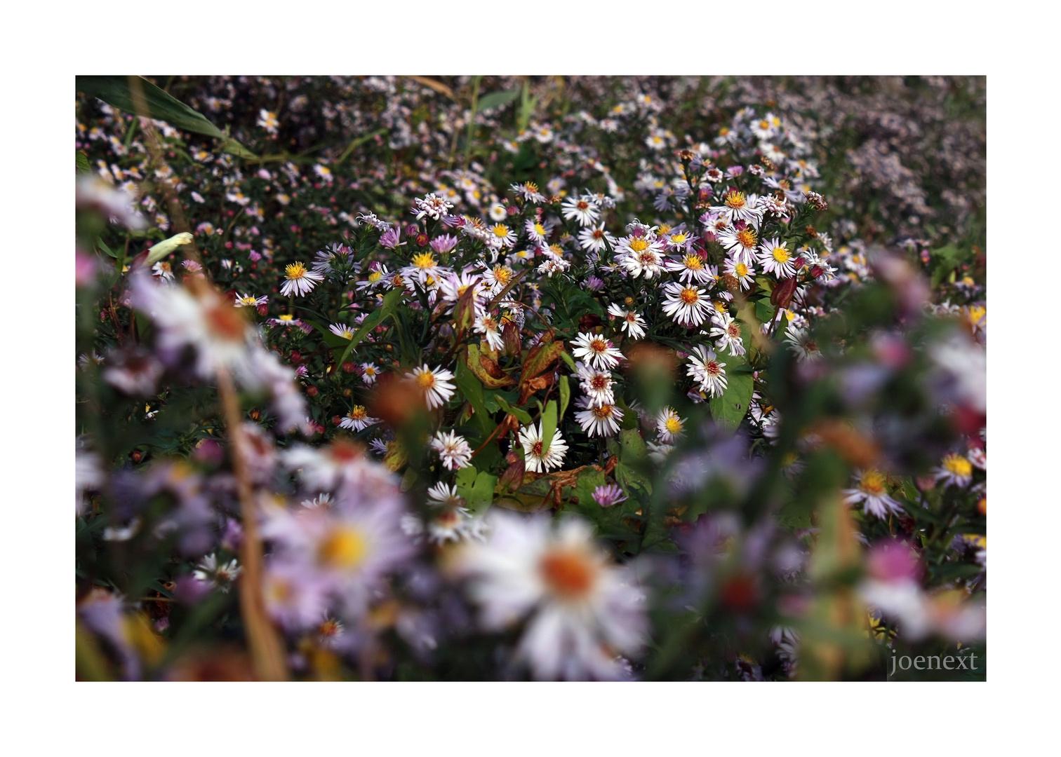herbstblüten im rhinluch