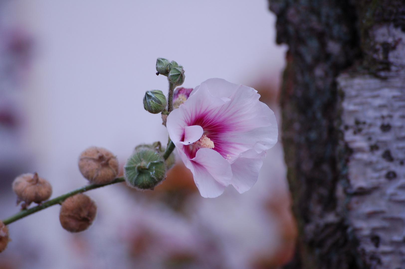 Herbstblumen 5