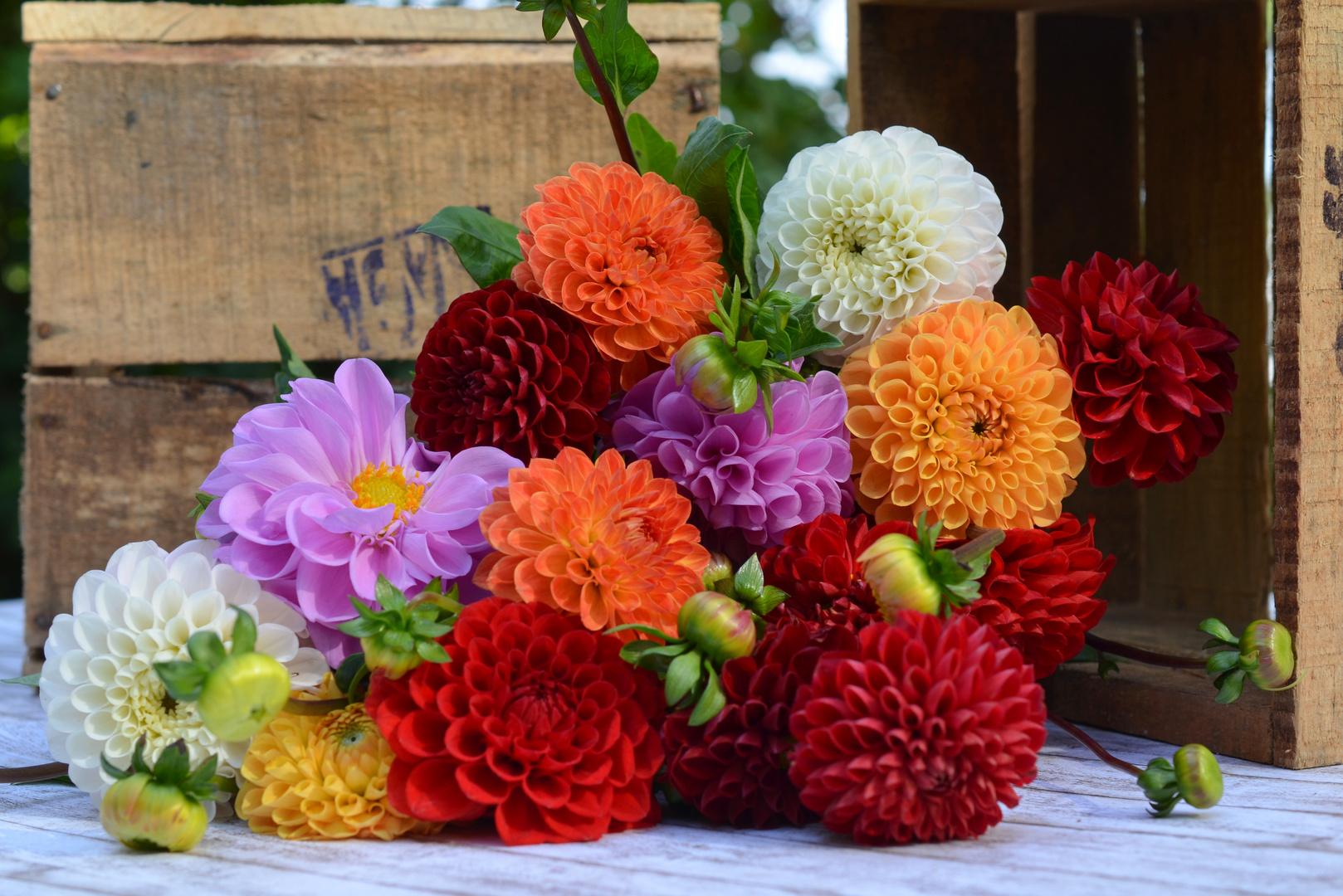 Anspruchsvoll Herbstblumen Sammlung Von