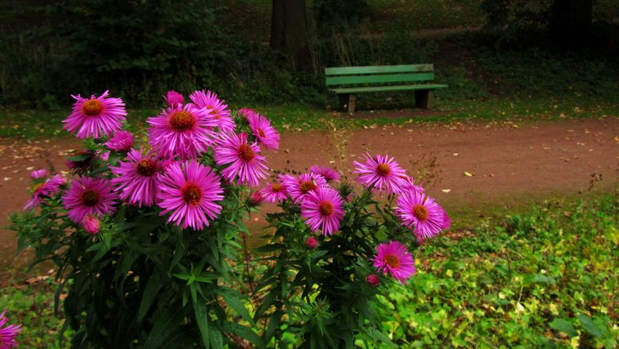 Herbstblumen...