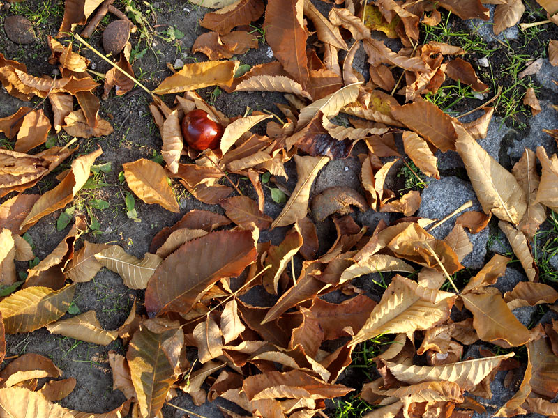 Herbstboden