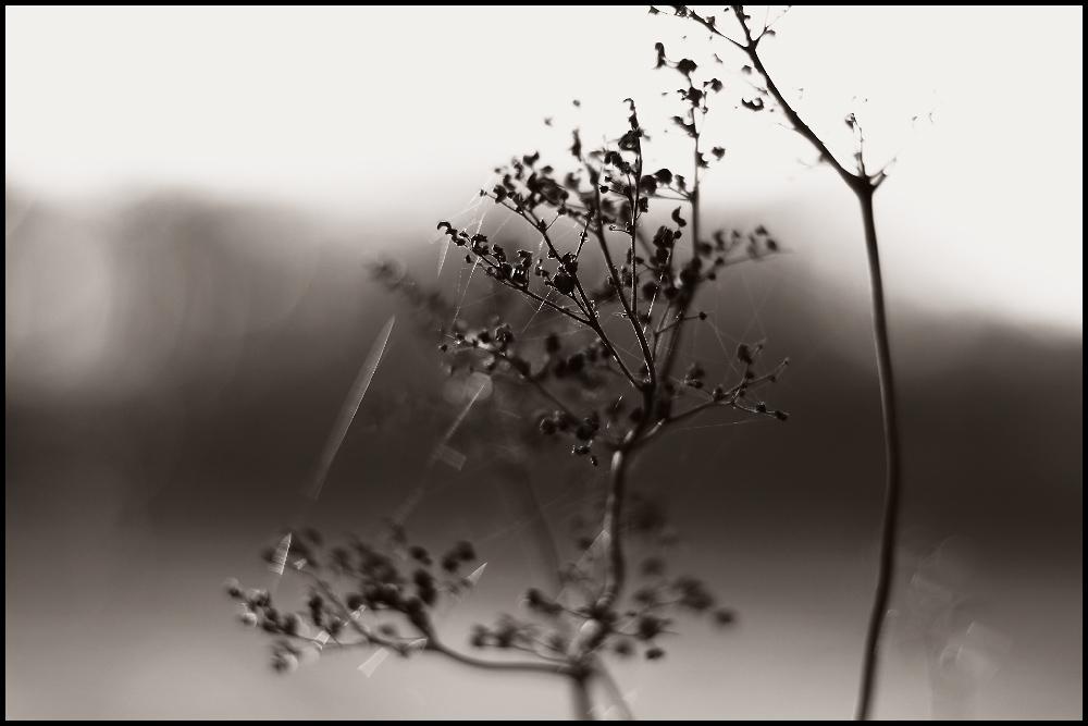 Herbstbokeh 2