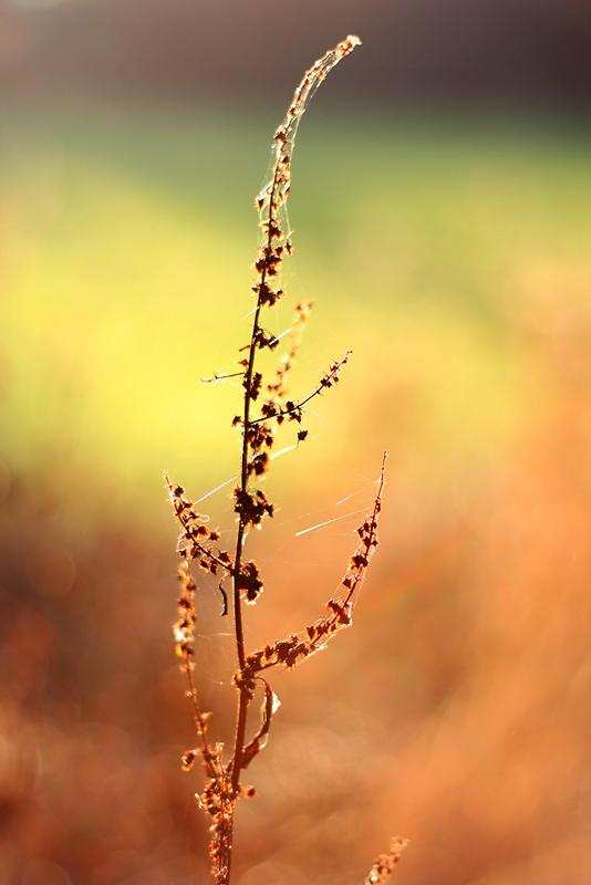 Herbstbokeh