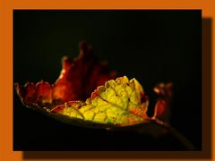 Herbstbote