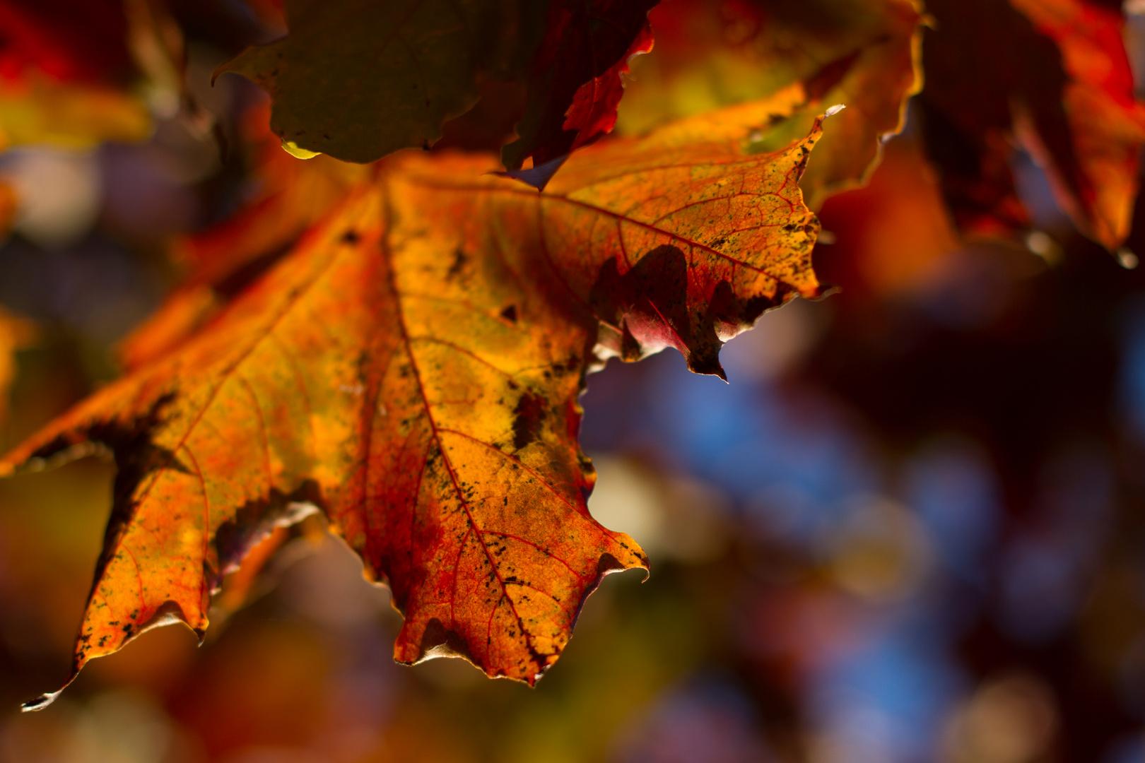 Herbstbrilliant