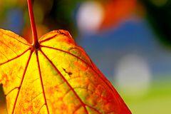 HerbstBUNT