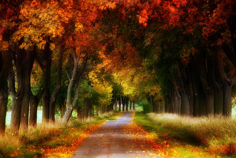 Herbstbunte Allee