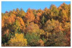 Herbstbunte Krone des Tales - Alles Individuen...