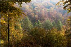 Herbstbunter Solling... (Variante 2)