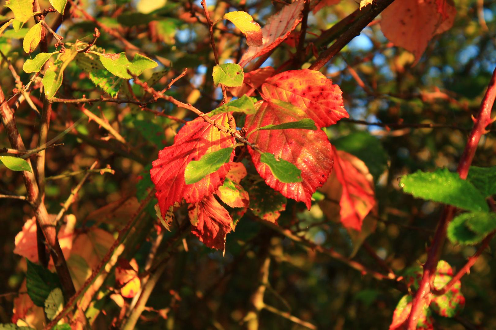 Herbstbusch