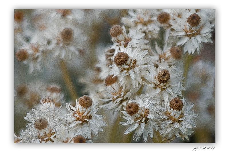 ~~~HerbstChoreografie~~~