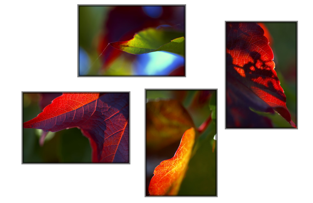 Herbstcollage 2