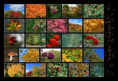 -Herbstcollage 2008-