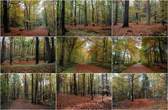 Herbstcollage 2013