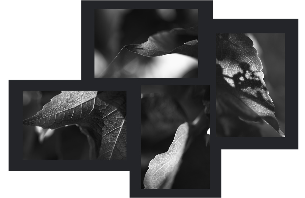 Herbstcollage b/w