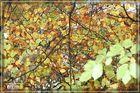 HerbstDach