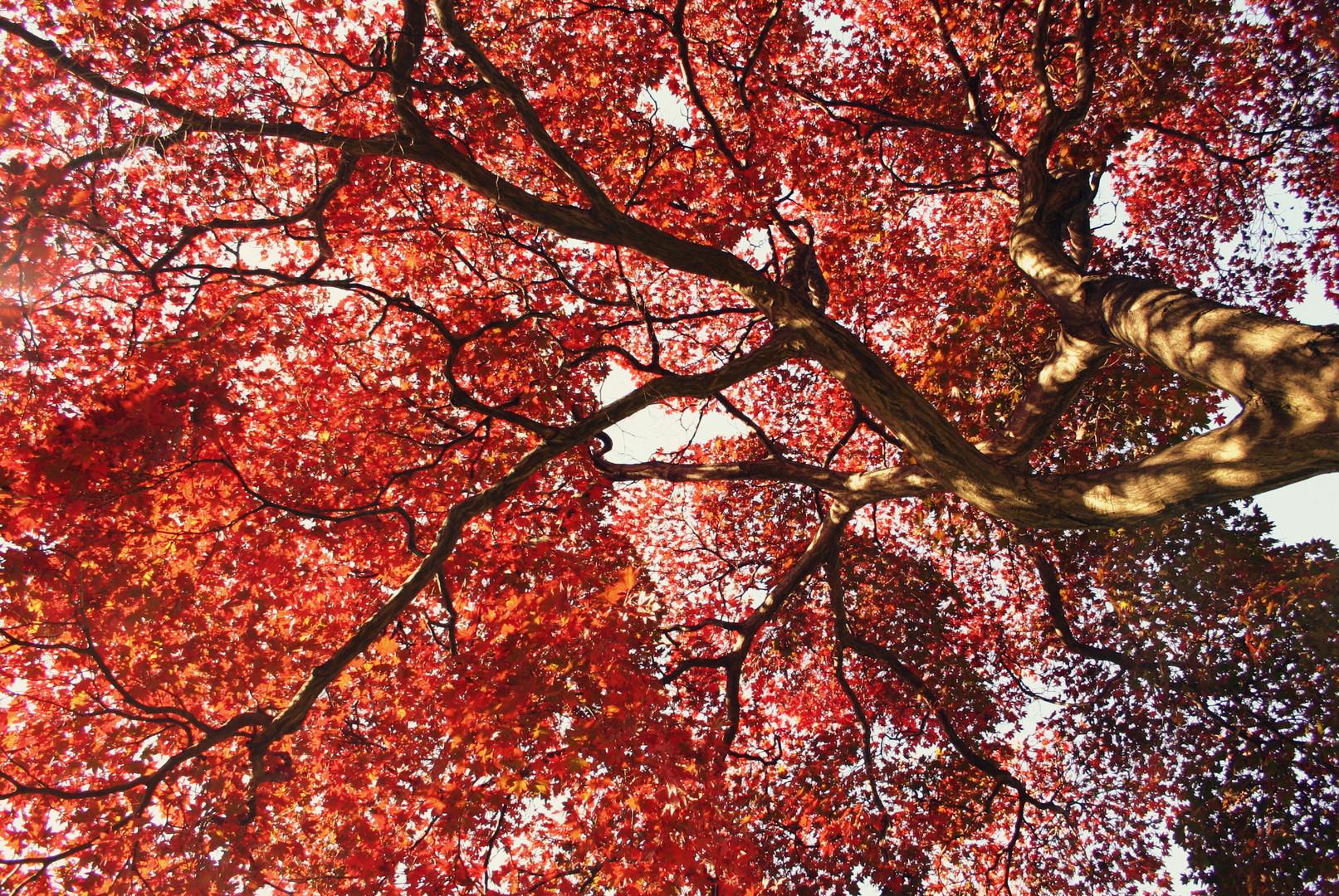 Herbstdach in Brooklyn